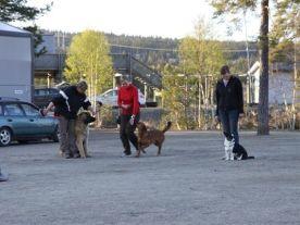 Temakurs med hunden i bånd